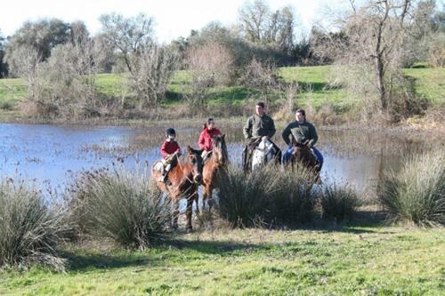 visithuelva caballo donana