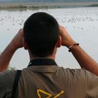 visithuelva observación aves donana